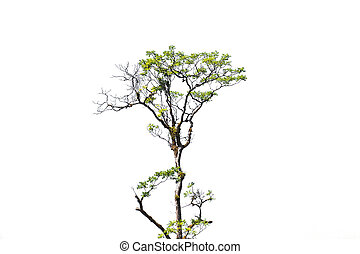 boompje, vrijstaand, op wit