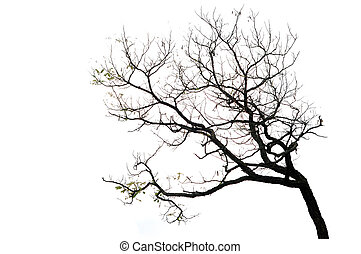 boompje, witte , takken, vrijstaand, achtergrond