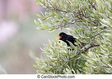 boompje, zwarte vogel