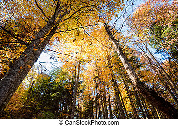 Bootom view trees in beautiful sunlit autumn forest