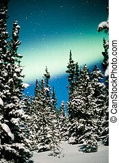 boréal, hiver, nord, aurore, lumières, forêt