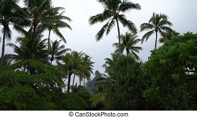Bora Bora and Mount Otemanu in Tahiti, French Polynesia. Video with palm trees and lush vegetation showing peak of Mt Pahia, Mt Otemanu in background. Tahiti, south Pacific Ocean.
