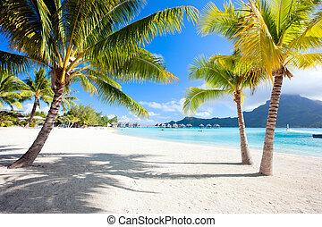Bora Bora beach - Beautiful beach with a view of Otemanu...