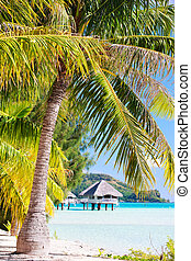 Bora Bora beach - Beautiful beach with a view to overwater...