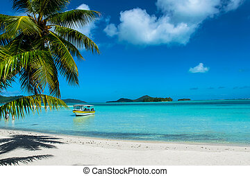 bora bora tropical beach