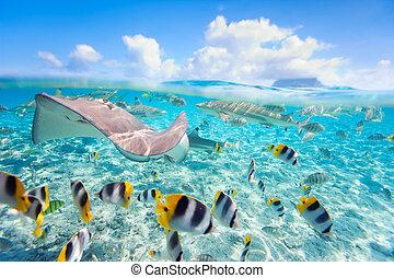 Bora Bora underwater - Colorful fish, stingray and black...