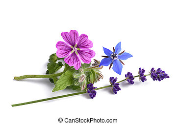 borage mallow and lavender flower isolated on white