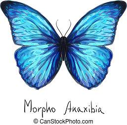borboleta, anaxibia., aquarela, imitation., morpho