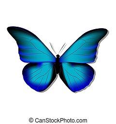 borboleta, azul, gradiente, morph, morpho, fundo, branca, sombra, 3d
