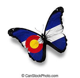 borboleta, bandeira, branca, colorado, isolado