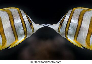 borboleta, beijo