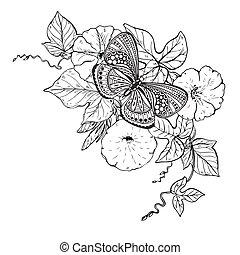 borboleta, bindweed, gráfico, f, ilustração, mão, vetorial, ...
