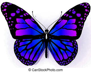 borboleta, costas, isolado, branca