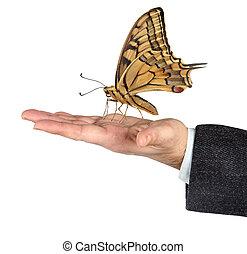 borboleta, em, mãos
