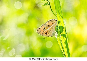 borboleta, em, verde, natureza