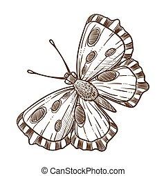 borboleta, esboço, esboço, ilustração, inseto, vetorial, monocromático, branca