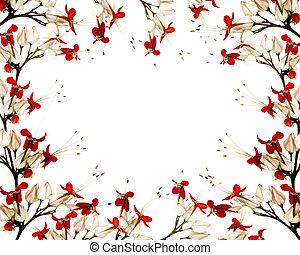 borboleta, flor, preto vermelho