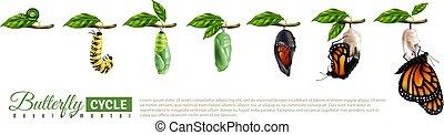 borboleta, horizontais, jogo, metamorfose
