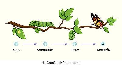 borboleta, lagarta, butterfly., ciclo, ovos, pupa, metamorphosis., vida