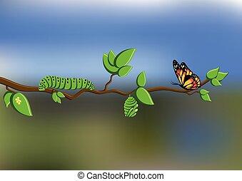 borboleta, lagarta, ciclo, natural, ovos, ramo, pupa, árvore, vida, fundo