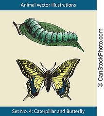 borboleta, lagarta, vetorial, ilustrações, animal
