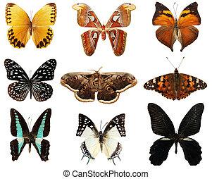 borboleta, ligado, a, fundo branco