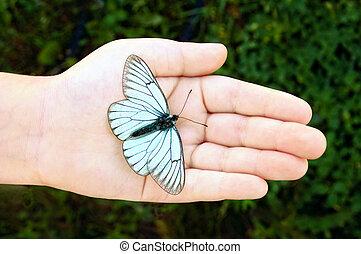borboleta, ligado, criança, mão
