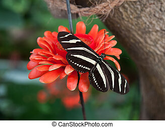 borboleta, ligado, flor