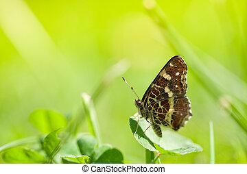 borboleta, ligado, grama verde, em, primavera, dia