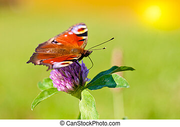 borboleta, ligado, um, flor, em, primavera, dia