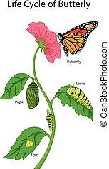 borboleta, monarca, vida, ilustração, ciclo
