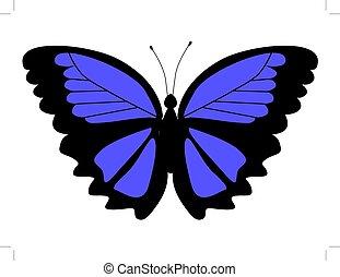 borboleta, morpho