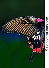 borboleta, mundo