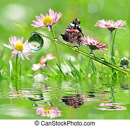 borboleta, orvalho