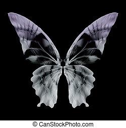borboleta, vetorial, isolado, raio x, black.