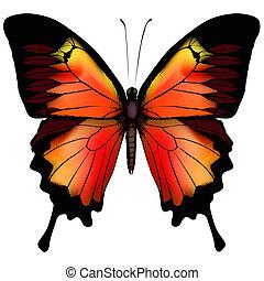 borboleta, vetorial, isolado