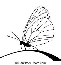 borboleta, vetorial, silueta, ilustração, fundo, branca