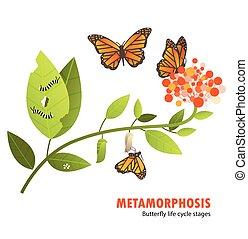 borboleta, vida, metamorfose, ciclo