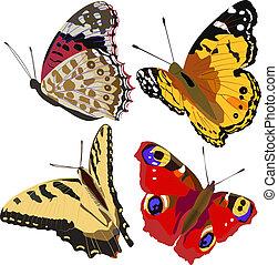 borboletas, coloridos