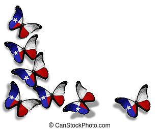borboletas, isolado, bandeira, fundo, branca, texas
