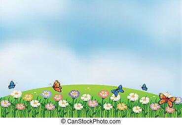 borboletas, topo, jardim, colinas