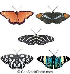 borboletas, vetorial, cinco, mais