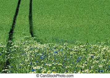 bord, cropfield
