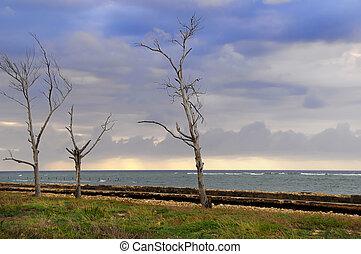 bord mer, orageux, paysage