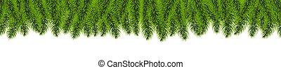 borda, branca, árvore, fundo, isolado, abeto
