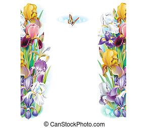 borda, de, íris, flores