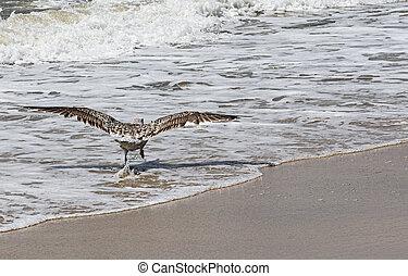 borda, mosca, costa, oceânicos, desligado, gaivota, levando, executando