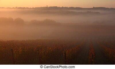 Bordeaux Vineyard at sunrise in autumn, Langoiran, Gironde, ...