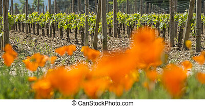 Bordeaux wine region in france flowers in the vineyard countrysi