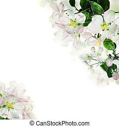 border., 春, 背景, ライト, 花, 白い花